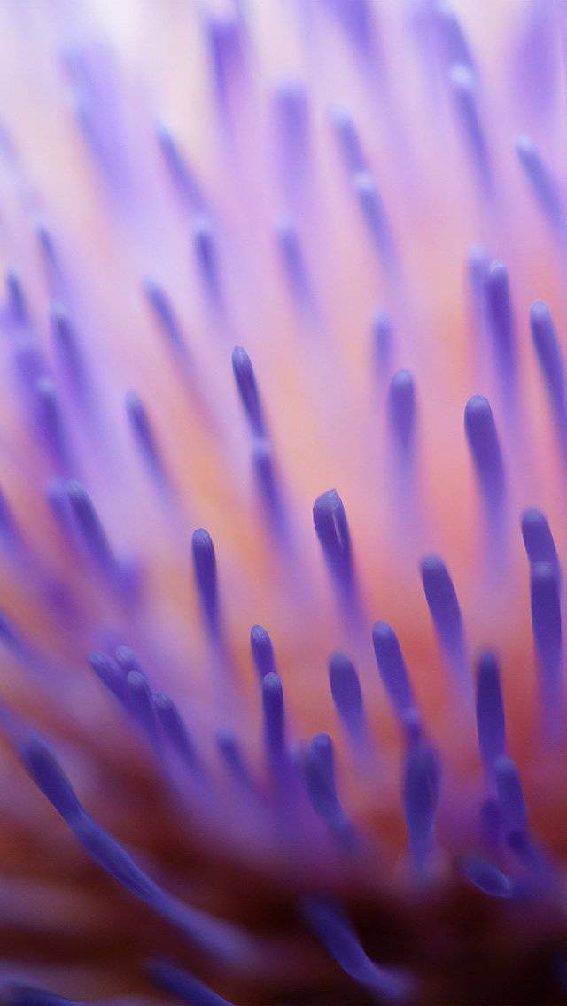 zoom-inside-purple-pattern-iphone-5