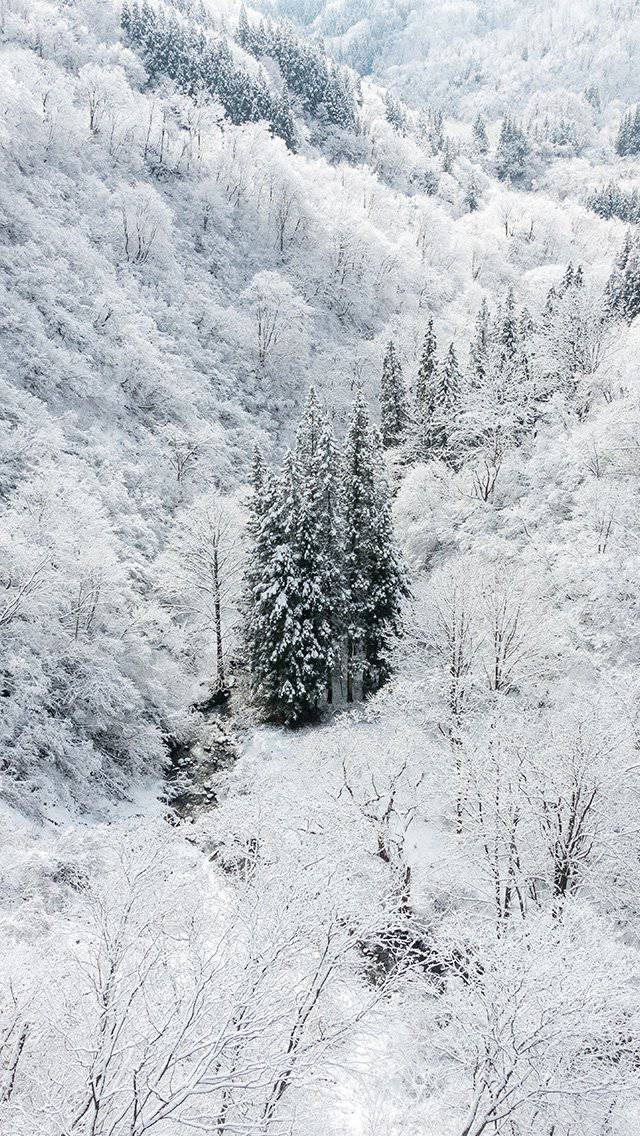 white-snow-wood-forest-mountain-iphone-5