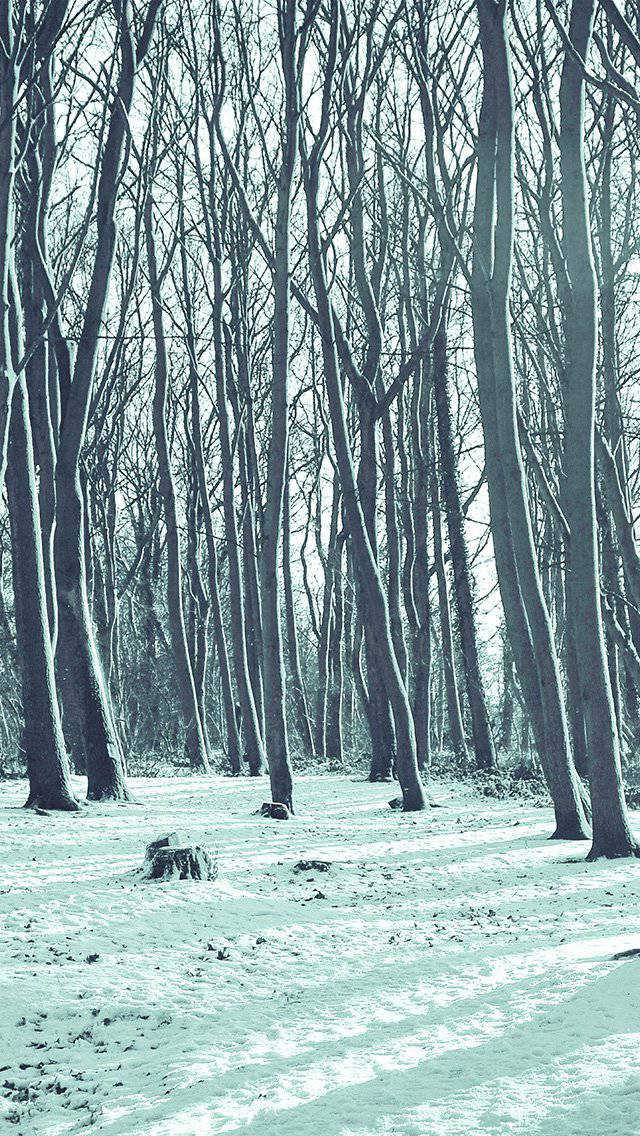 winter-forest-snow-nature-mountain-blue-iphone-5